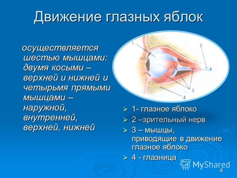Движение глазных яблок осуществляется шестью мышцами: двумя косыми – верхней и нижней и четырьмя прямыми мышцами – наружной, внутренней, верхней, нижней осуществляется шестью мышцами: двумя косыми – верхней и нижней и четырьмя прямыми мышцами – наруж
