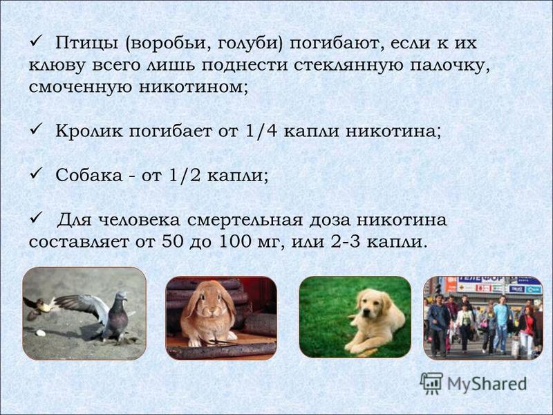 Птицы (воробьи, голуби) погибают, если к их клюву всего лишь поднести стеклянную палочку, смоченную никотином; Кролик погибает от 1/4 капли никотина ; Собака - от 1/2 капли; Для человека смертельная доза никотина составляет от 50 до 100 мг, или 2-3 к