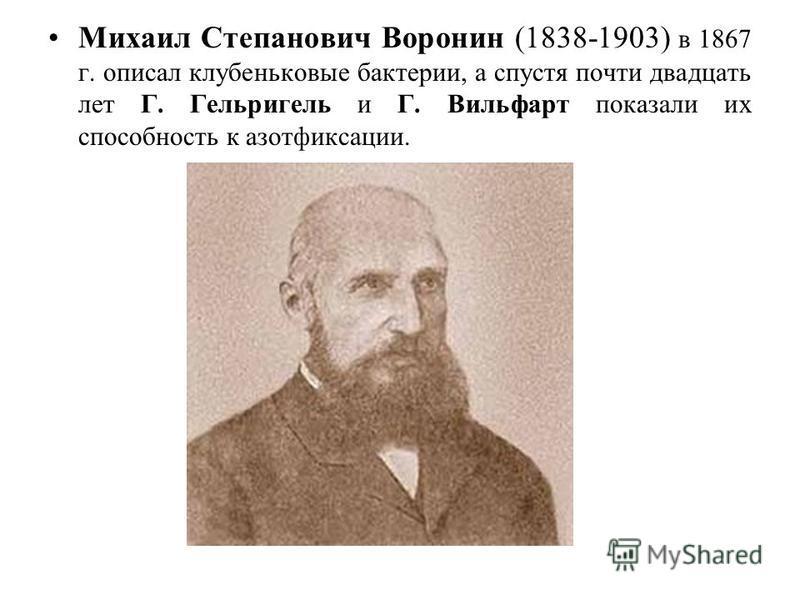 Михаил Степанович Воронин (1838-1903) в 1867 г. описал клубеньковые бактерии, а спустя почти двадцать лет Г. Гельригель и Г. Вильфарт показали их способность к азотфиксации.