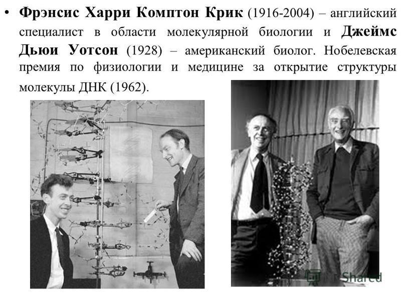 Фрэнсис Харри Комптон Крик (1916-2004) – английский специалист в области молекулярной биологии и Джеймс Дьюи Уотсон (1928) – американский биолог. Нобелевская премия по физиологии и медицине за открытие структуры молекулы ДНК (1962).