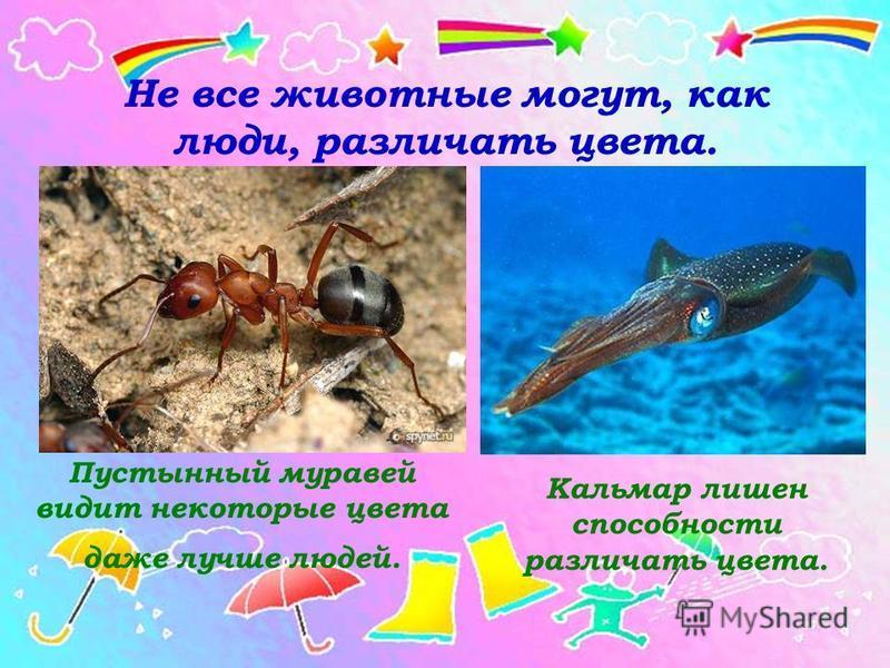 Не все животные могут, как люди, различать цвета. Пустынный муравей видит некоторые цвета даже лучше людей. Кальмар лишен способности различать цвета.