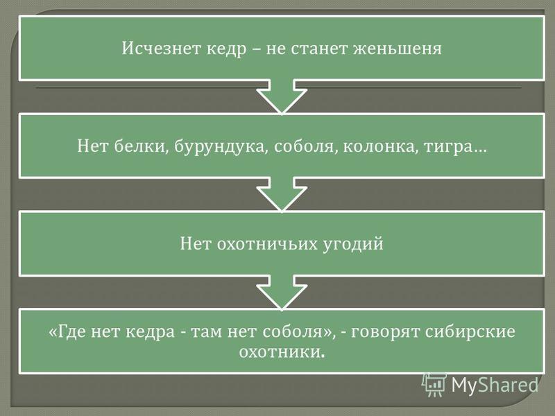 « Где нет кедра - там нет соболя », - говорят сибирские охотники. Нет охотничьих угодий Нет белки, бурундука, соболя, колонка, тигра … Исчезнет кедр – не станет женьшеня