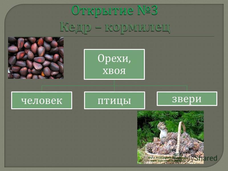 Орехи, хвоя человек птицы звери
