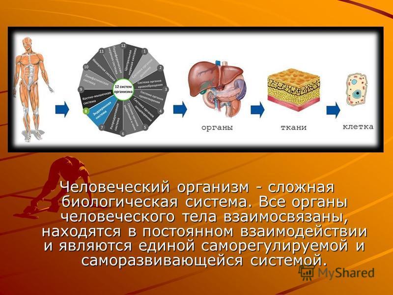 Человеческий организм - сложная биологическая система. Все органы человеческого тела взаимосвязаны, находятся в постоянном взаимодействии и являются единой саморегулируемой и саморазвивающейся системой.