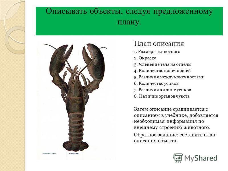 План описания 1. Размеры животного 2. Окраска 3. Членение тела на отделы 4. Количество конечностей 5. Различия между конечностями 6. Количество усиков 7. Различия в длине усиков 8. Наличие органов чувств Затем описание сравнивается с описанием в учеб