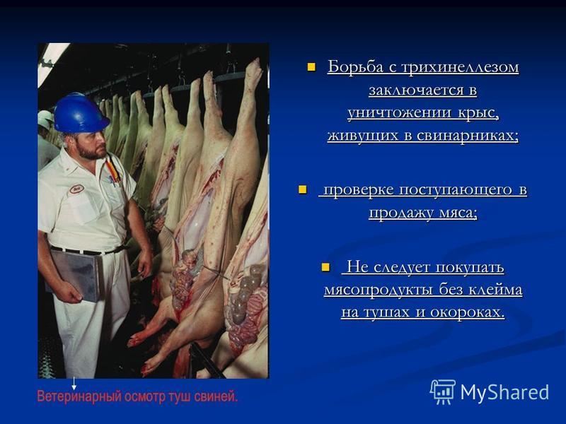 Борьба с трихинеллезом заключается в уничтожении крыс, живущих в свинарниках; Борьба с трихинеллезом заключается в уничтожении крыс, живущих в свинарниках; проверке поступающего в продажу мяса; проверке поступающего в продажу мяса; Не следует покупат