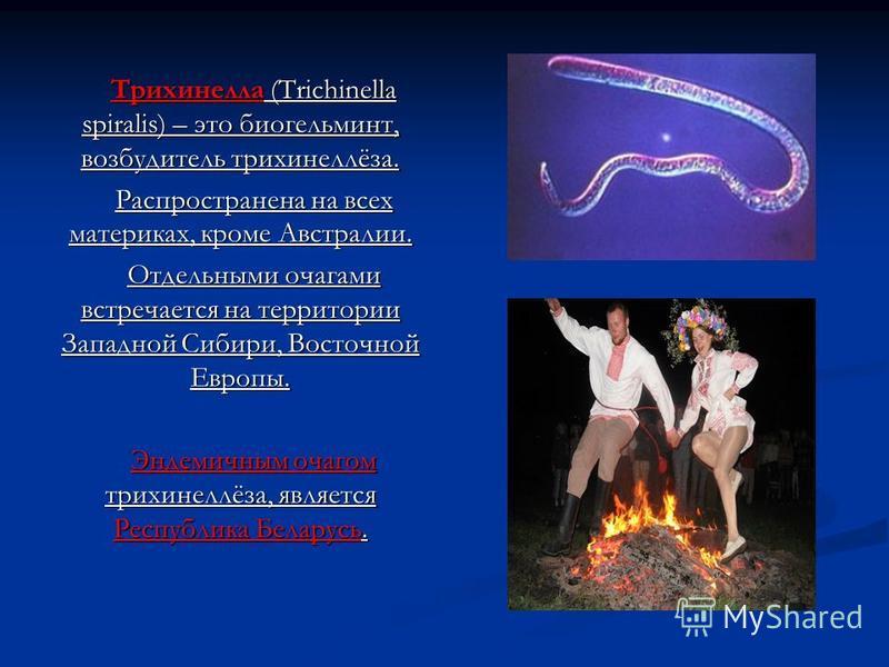 Трихинелла (Trichinella spiralis) – это биогельминт, возбудитель трихинеллёза. Распространена на всех материках, кроме Австралии. Отдельными очагами встречается на территории Западной Сибири, Восточной Европы. Эндемичным очагом трихинеллёза, является