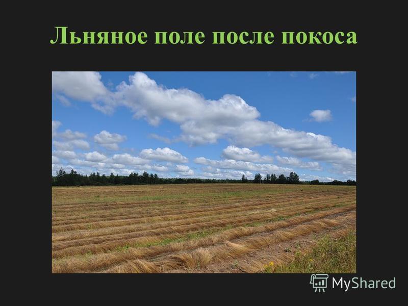 Льняное поле после покоса