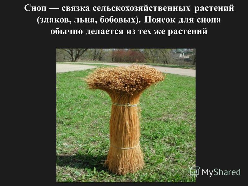 Сноп связка сельскохозяйственных растений (злаков, льна, бобовых). Поясок для снопа обычно делается из тех же растений