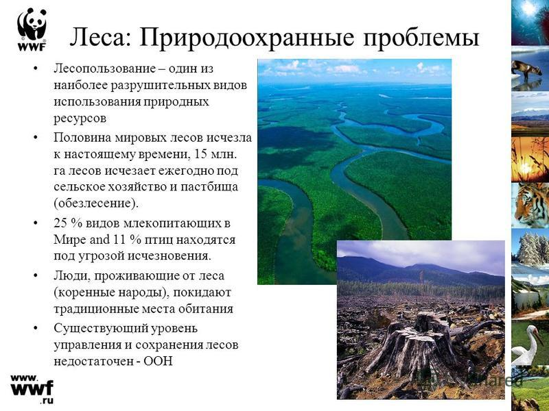 Леса: Природоохранные проблемы Лесопользование – один из наиболее разрушительных видов использования природных ресурсов Половина мировых лесов исчезла к настоящему времени, 15 млн. га лесов исчезает ежегодно под сельское хозяйство и пастбища (обезлес
