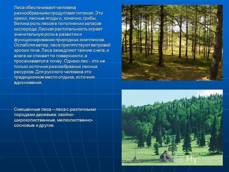 Леса обеспечивают человека разнообразными продуктами питания. Это орехи, лесные ягоды и, конечно, грибы. Велика роль лесов в пополнении запасов кислорода. Лесная растительность играет значительную роль в развитии и функционировании природных комплекс