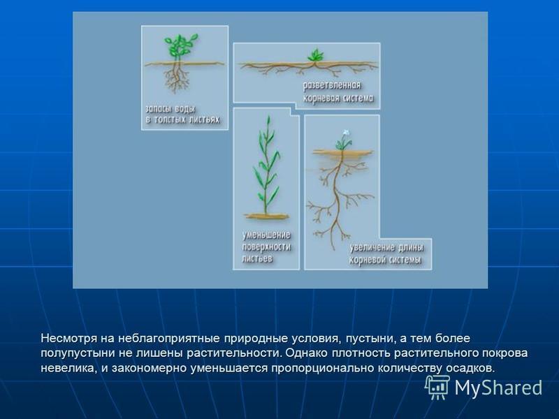 Несмотря на неблагоприятные природные условия, пустыни, а тем более полупустыни не лишены растительности. Однако плотность растительного покрова невелика, и закономерно уменьшается пропорционально количеству осадков.