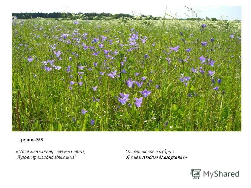 Группа 3 «Полями пахнет, - свежих трав, От сенокосов и дубрав Лугов, прохладное дыханье! Я в нем люблю благоуханье»
