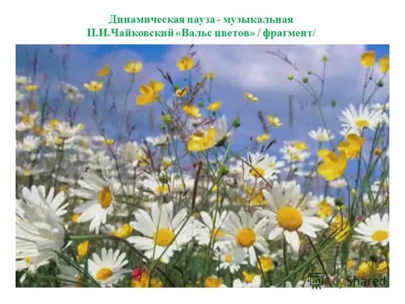 Динамическая пауза - музыкальная П.И.Чайковский «Вальс цветов» / фрагмент/