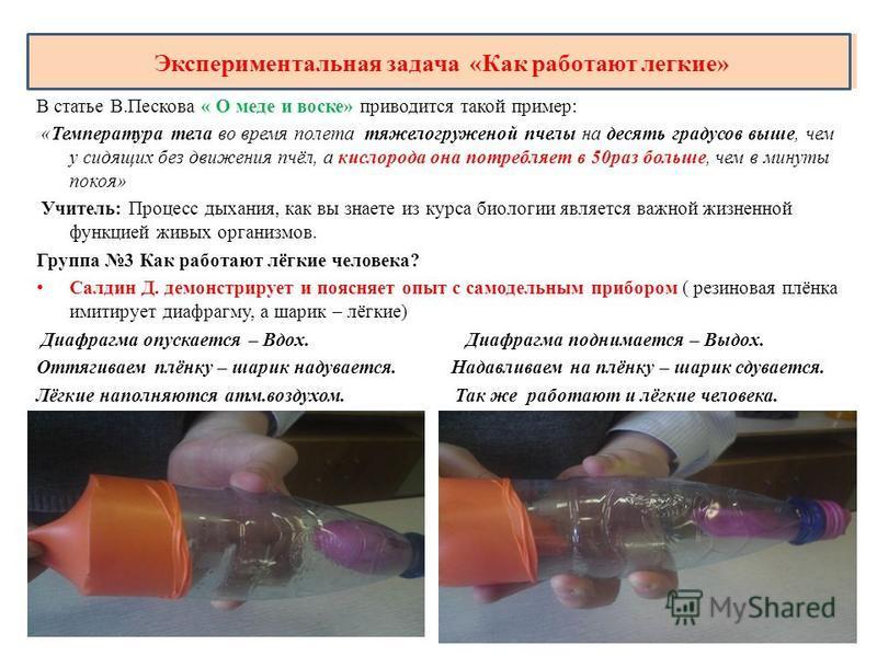 Экспериментальная задача «Как работают легкие» В статье В.Пескова « О меде и воске» приводится такой пример: «Температура тела во время полета тяжелогруженой пчелы на десять градусов выше, чем у сидящих без движения пчёл, а кислорода она потребляет в