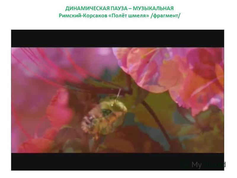ДИНАМИЧЕСКАЯ ПАУЗА – МУЗЫКАЛЬНАЯ Римский-Корсаков «Полёт шмеля» /фрагмент/