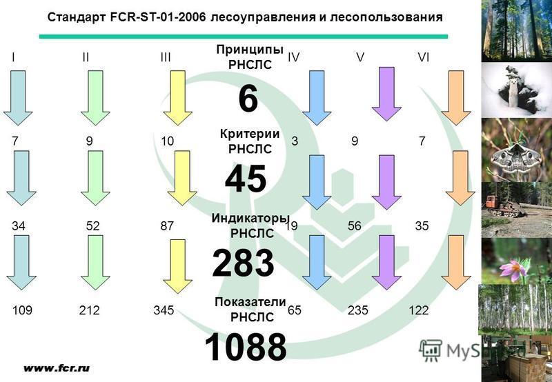 Стандарт FCR-ST-01-2006 лесоуправления и лесопользования Критерии РНСЛС Принципы РНСЛС Индикаторы РНСЛС I II III IV V VI 7 9 10 3 9 7 34 52 87 19 56 35 Показатели РНСЛС 109 212 345 65 235 122 6 45 283 1088