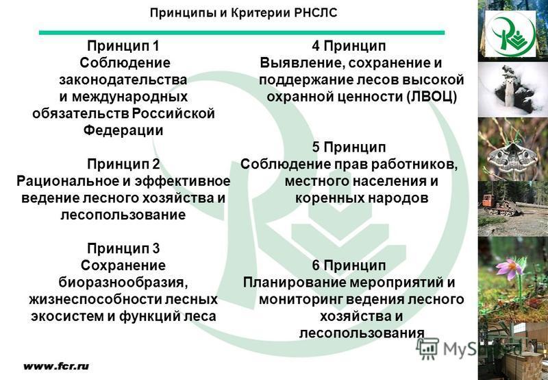 Принципы и Критерии РНСЛС Принцип 1 Соблюдение законодательства и международных обязательств Российской Федерации Принцип 2 Рациональное и эффективное ведение лесного хозяйства и лесопользование Принцип 3 Сохранение биоразнообразия, жизнеспособности