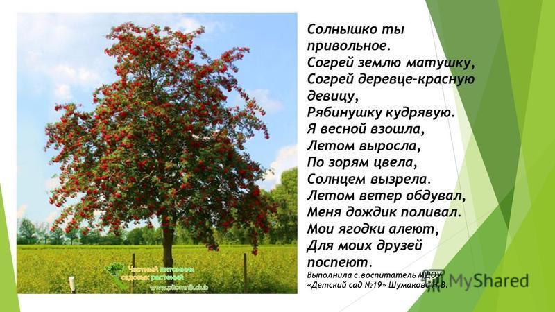 Солнышко ты привольное. Согрей землю матушку, Согрей деревце-красную девицу, Рябинушку кудрявую. Я весной взошла, Летом выросла, По зорям цвела, Солнцем вызрела. Летом ветер обдувал, Меня дождик поливал. Мои ягодки алеют, Для моих друзей поспеют. Вып