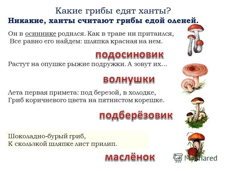 Что берут с собой женщины ханты, когда идут по ягоды? кузовок лукошко А почему только по ягоды, а не грибы? Грибы ханты не едят. Считают, что это еда для оленей.