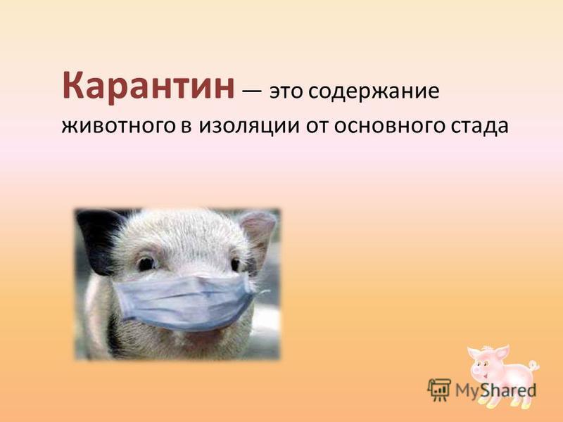 Карантин это содержание животного в изоляции от основного стада