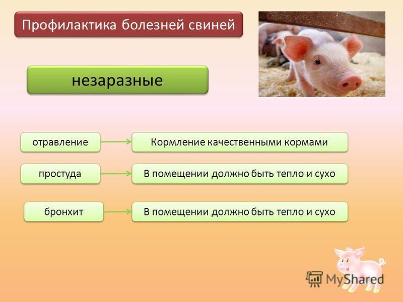 Профилактика болезней свиней незаразные отравление простуда бронхит Кормление качественными кормами В помещении должно быть тепло и сухо