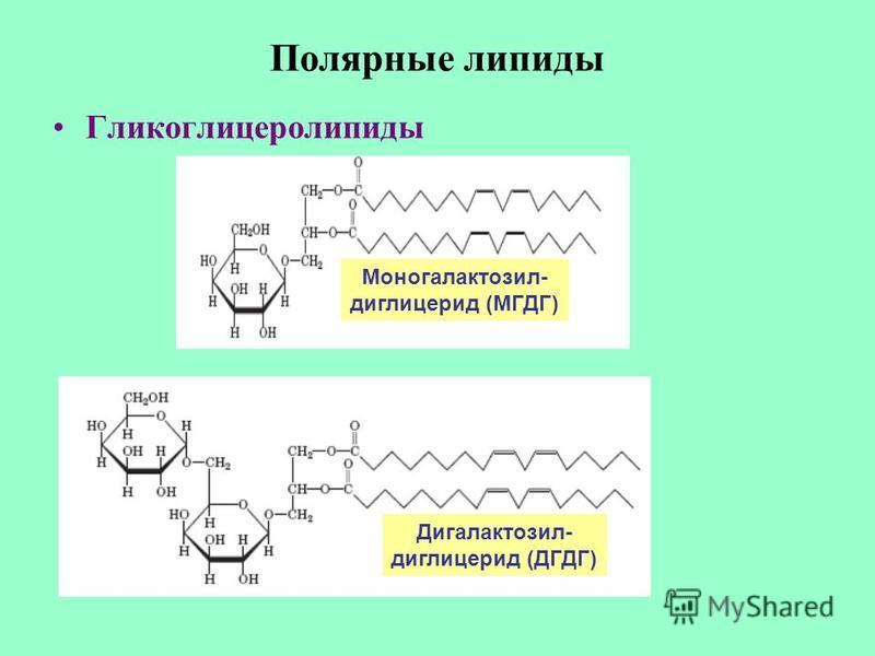 Полярные липиды Гликоглицеролипиды Моногалактозил- диглицерид (МГДГ) Дигалактозил- диглицерид (ДГДГ)