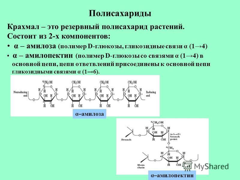 Полисахариды Крахмал – это резервный полисахарид растений. Состоит из 2-х компонентов: α – амилоза (полимер D-глюкозы, гликозидные связи α (14) α – амилопектин (полимер D-глюкозы со связями α (14) в основной цепи, цепи ответвлений присоединены к осно
