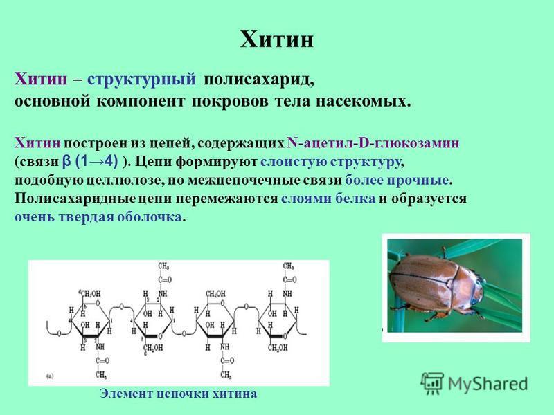 Хитин Хитин – структурный полисахарид, основной компонент покровов тела насекомых. Хитин построен из цепей, содержащих N-ацетил-D-глюкозамин (связи β (14) ). Цепи формируют слоистую структуру, подобную целлюлозе, но межцепочечные связи более прочные.