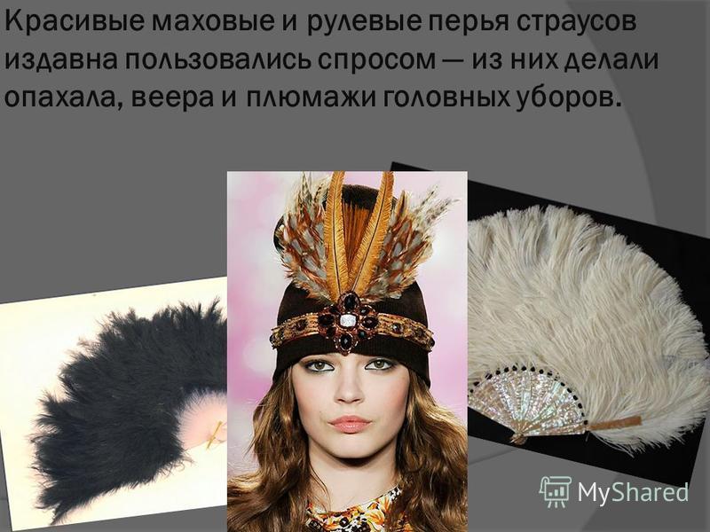 Красивые маховые и рулевые перья страусов издавна пользовались спросом из них делали опахала, веера и плюмажи головных уборов.