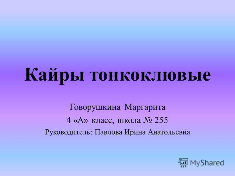 Кайры тонкоклювые Говорушкина Маргарита 4 «А» класс, школа 255 Руководитель: Павлова Ирина Анатольевна