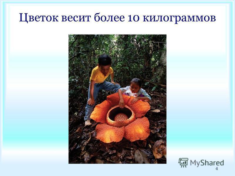 Цветок весит более 10 килограммов 4
