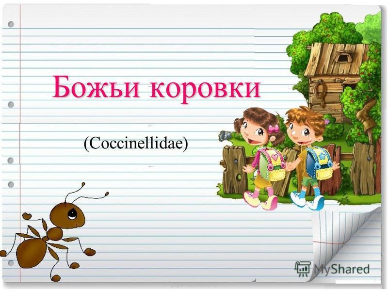 Божьи коровки (Coccinellidae) papa-vlad.narod.ru