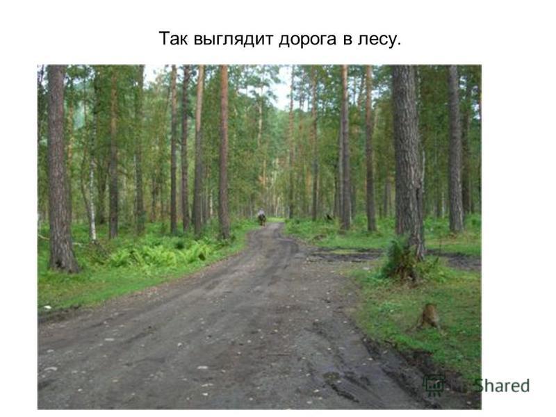 Дорога в селе.