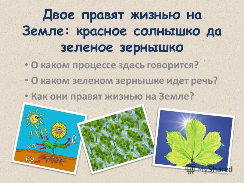 Двое правят жизнью на Земле: красное солнышко да зеленое зернышко О каком процессе здесь говорится? О каком зеленом зернышке идет речь? Как они правят жизнью на Земле?