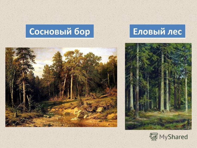 Еловый лес Сосновый бор