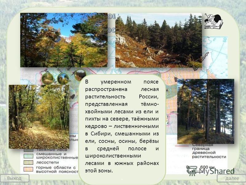 В умеренном поясе распространена лесная растительность России, представленная тёмно- хвойными лесами из ели и пихты на севере, таёжными кедрово – лиственничными в Сибири, смешанными из ели, сосны, осины, берёзы в средней полосе и широколиственными ле