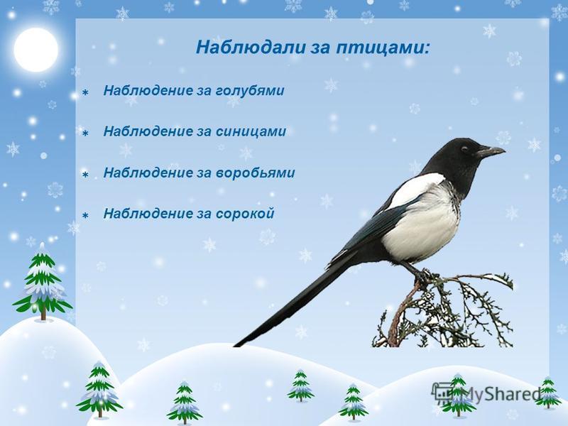 Наблюдали за птицами: Наблюдение за голубями Наблюдение за синицами Наблюдение за воробьями Наблюдение за сорокой