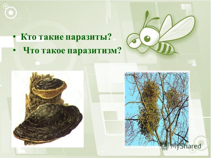 Кто такие паразиты? Что такое паразитизм?