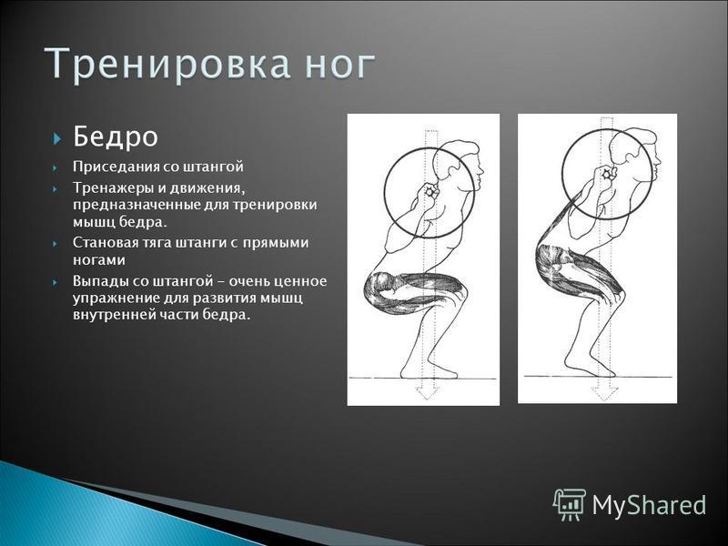 Бедро Приседания со штангой Тренажеры и движения, предназначенные для тренировки мышц бедра. Становая тяга штанги с прямыми ногами Выпады со штангой - очень ценное упражнение для развития мышц внутренней части бедра.