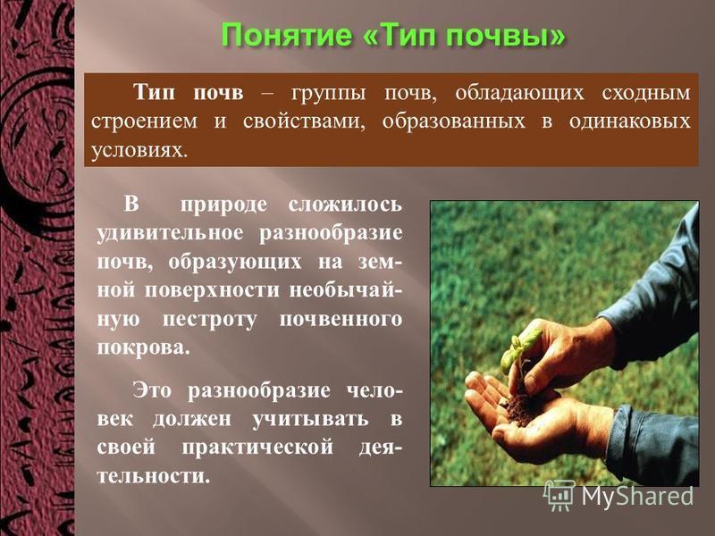 Понятие « Тип почвы » Тип почв – группы почв, обладающих сходным строением и свойствами, образованных в одинаковых условиях. В природе сложилось удивительное разнообразие почв, образующих наземной поверхности необычай- ную пестроту почвенного покрова
