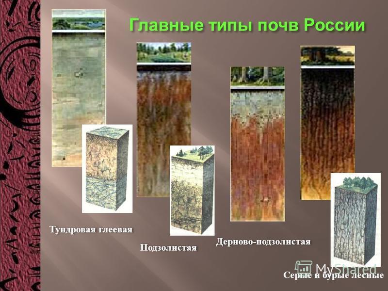 Тундровая глеевая Подзолистая Дерново - подзолистая Серые и бурые лесные Главные типы почв России