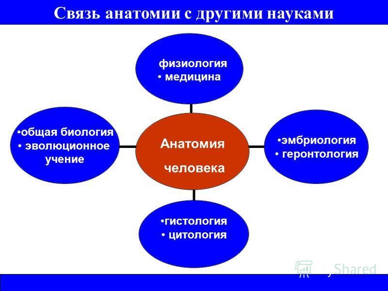 Анатомия человека физиология медицина эмбриология геронтология гистология цитология общая биология эволюционное учение Связь анатомии с другими науками
