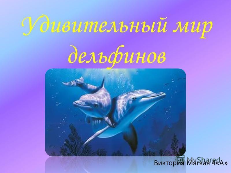 Удивительный мир дельфинов Виктория Мягкая 4«А»