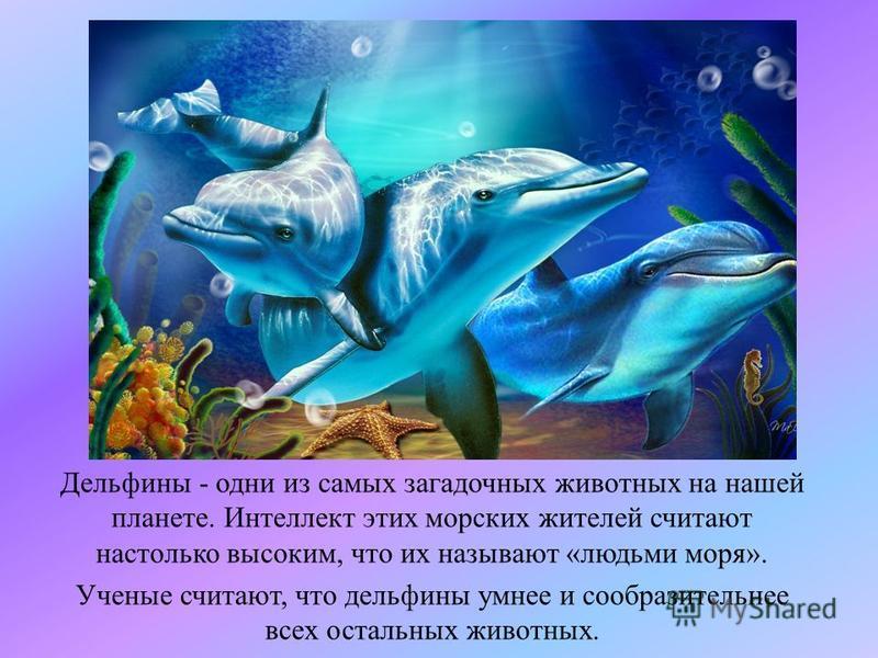 Дельфины - одни из самых загадочных животных на нашей планете. Интеллект этих морских жителей считают настолько высоким, что их называют «людьми моря». Ученые считают, что дельфины умнее и сообразительнее всех остальных животных.