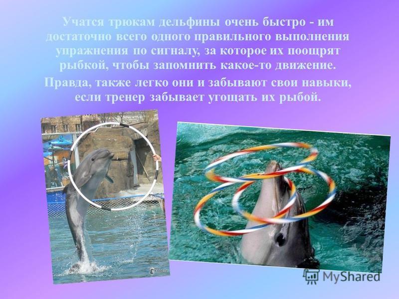 Учатся трюкам дельфины очень быстро - им достаточно всего одного правильного выполнения упражнения по сигналу, за которое их поощрят рыбкой, чтобы запомнить какое-то движение. Правда, также легко они и забывают свои навыки, если тренер забывает угоща