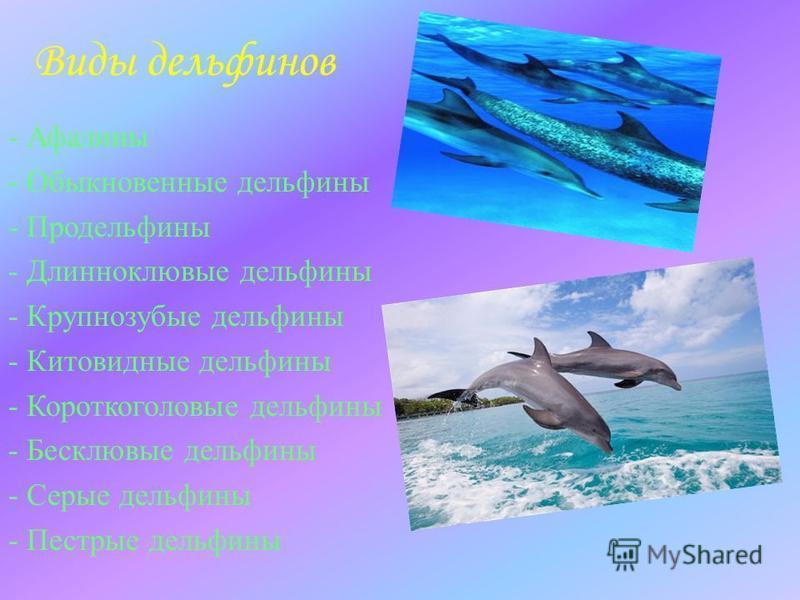 Виды дельфинов - Афалины - Обыкновенные дельфины - Продельфины - Длинноклювые дельфины - Крупнозубые дельфины - Китовидные дельфины - Короткоголовые дельфины - Бесклювые дельфины - Серые дельфины - Пестрые дельфины