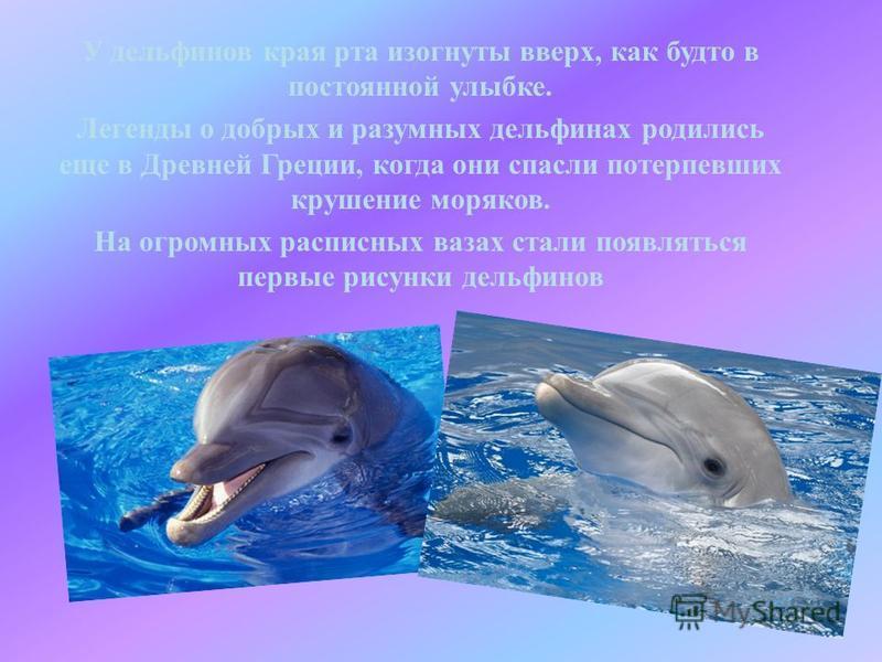 У дельфинов края рта изогнуты вверх, как будто в постоянной улыбке. Легенды о добрых и разумных дельфинах родились еще в Древней Греции, когда они спасли потерпевших крушение моряков. На огромных расписных вазах стали появляться первые рисунки дельфи