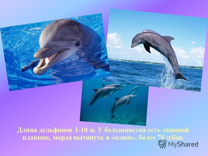 Длина дельфинов 1-10 м. У большинства есть спинной плавник, морда вытянута в «клюв», более 70 зубов.