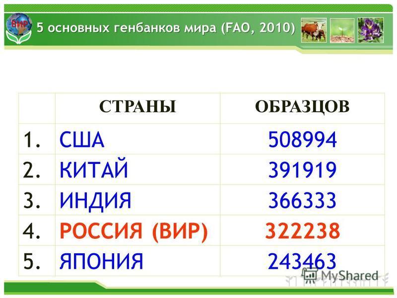 ВИР СТРАНЫОБРАЗЦОВ 1.1.США508994 2.КИТАЙ391919 3.ИНДИЯ366333 4. РОССИЯ (ВИР)322238 5.ЯПОНИЯ243463 5 основных генбанков мира (FAO, 2010)